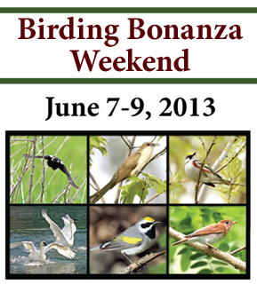 Birding Bonanza